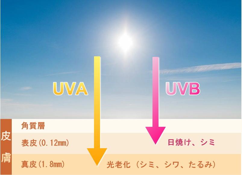 紫外線の紫外線A波/UVAと紫外線B波/UVB
