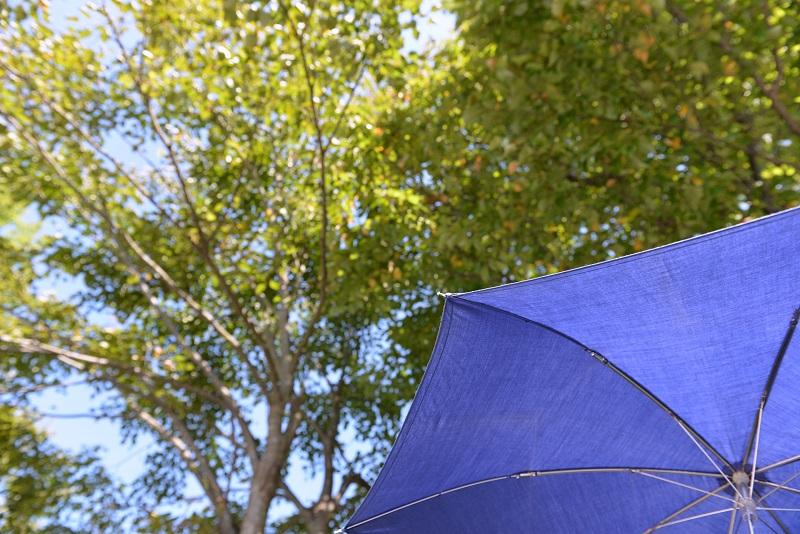 日傘でUVカット